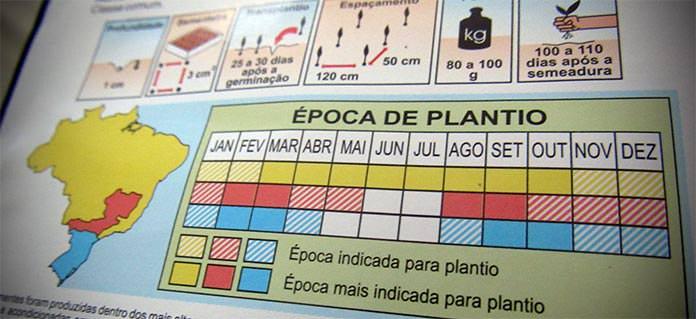 Melhor época para plantar sementes