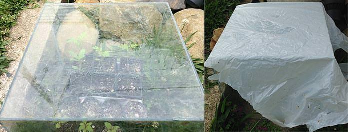 Estufa improvisada para plantar sementes
