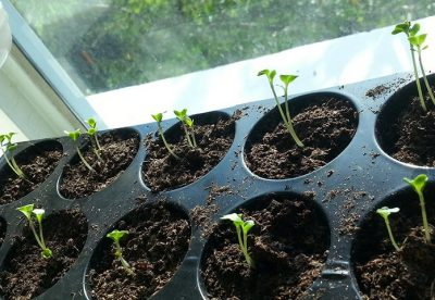 Como plantar sementes de forma correta