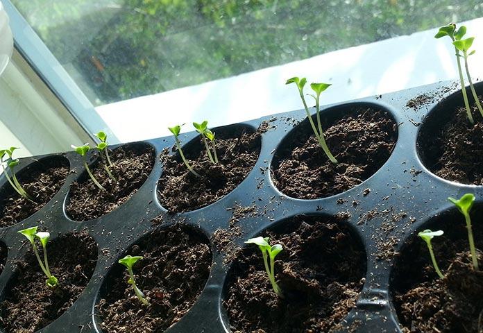 Aprenda a plantar sementes