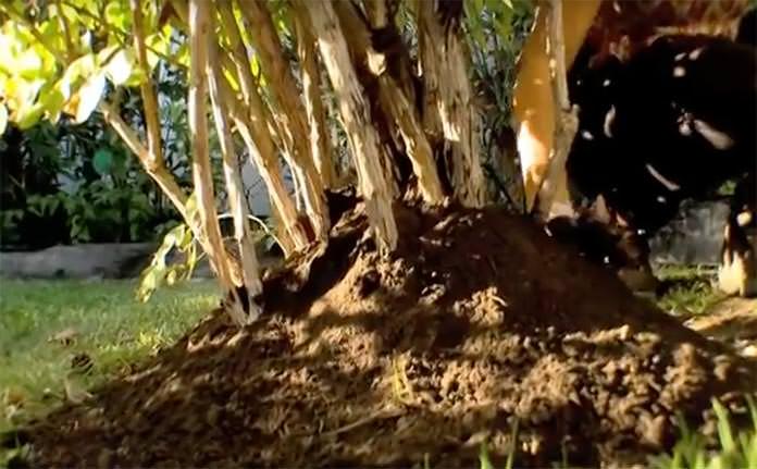 Terra protegendo caule e raízes