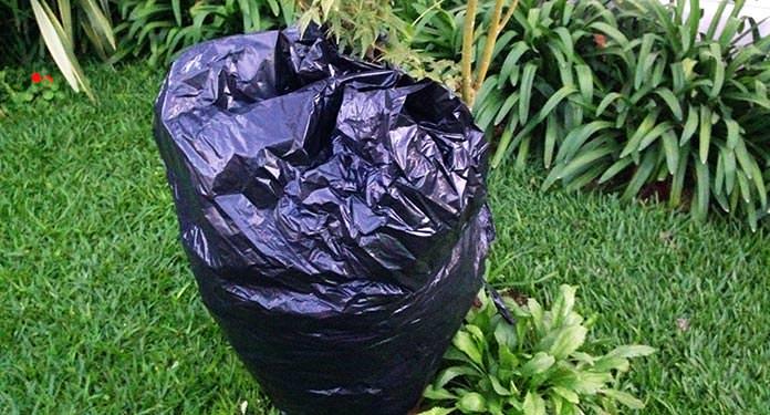 Planta coberta por plástico
