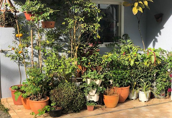 Plantas protegidas da geada