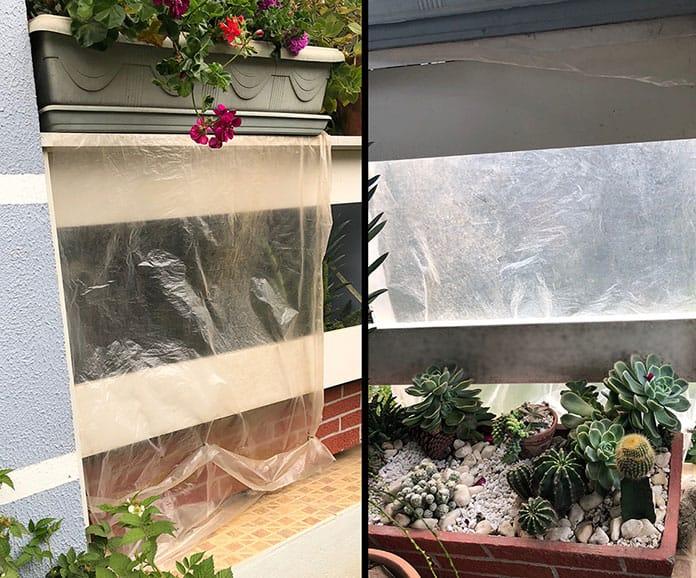 Plantas protegidas com parede de plástico
