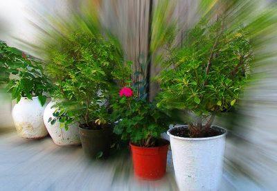 Como plantar em vasos de forma correta