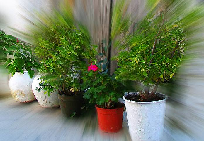 Como plantar em vasos