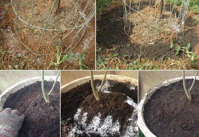 Adubação orgânica e química: Guia completo de como e quando adubar as plantas