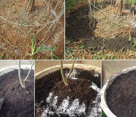Como adubar as plantas