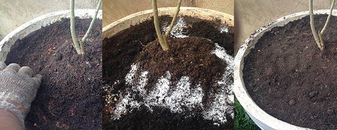 Como adubar plantas em vaso