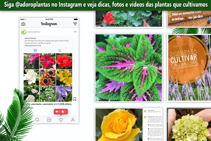 Siga a gente no Instagram