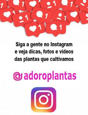 Instagram Adoro Plantas